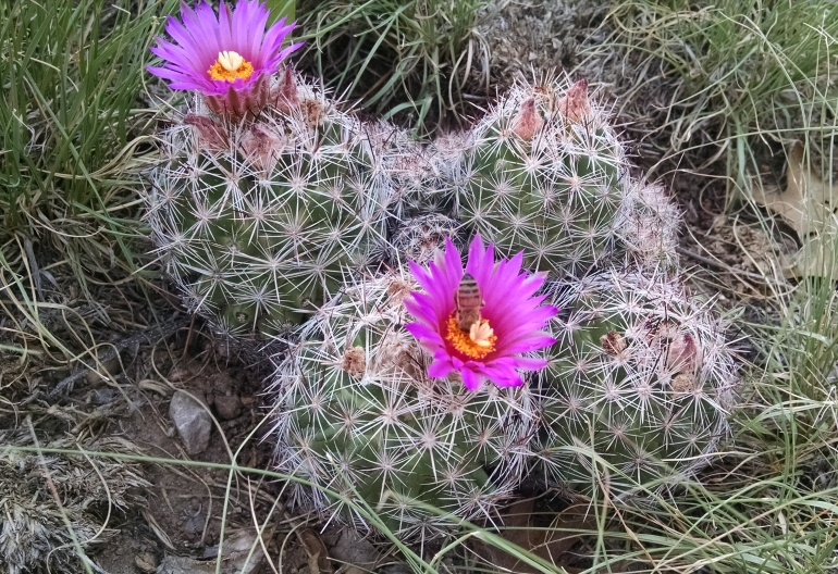 pink-catus-flower.jpg
