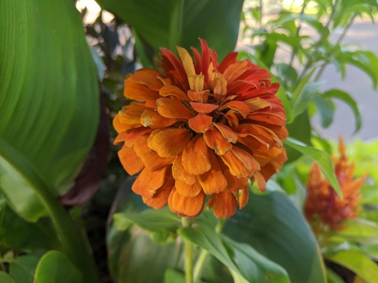 Orange Flower 2020
